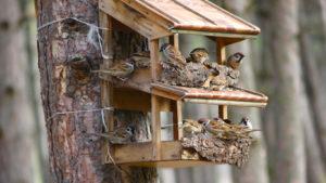 karmnik-dla-ptakow